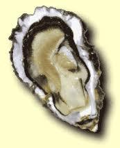 Une huître creuse