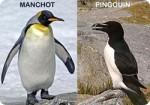 Manchot et Pingouin