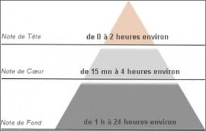 La pyramide olfactive et la durée de la senteur des différentes notes.