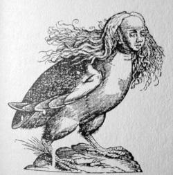 Une Harpie