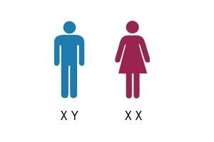 Chromosomes XX fille et XY garçon