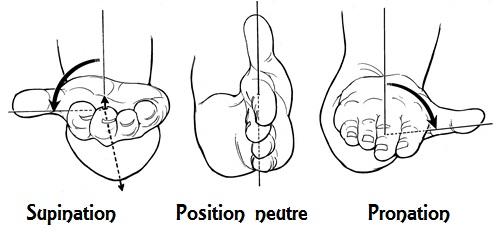 """Mouvements de la main et du poignet: supination à gauche, position """"neutre"""" au centre, pronation à droite."""