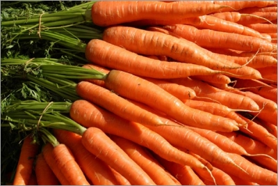 Des carottes, des carottes, encore des carottes !