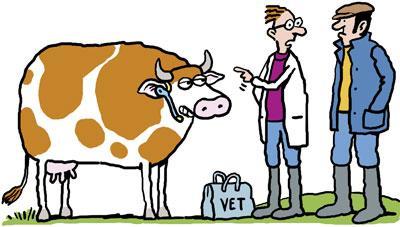 Vache médecin