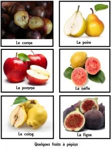 Une planche illustrative de quelques fruits à pépins.