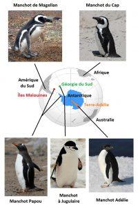 carte_manchot_adélie_papou_du_cap_de_magellan_royal_empereur_antarctique