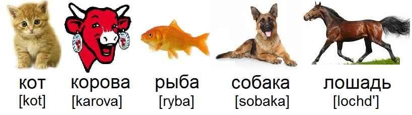 chat_кот_vache_корова_poisson_рыба_chien_собака_cheval_лошадь