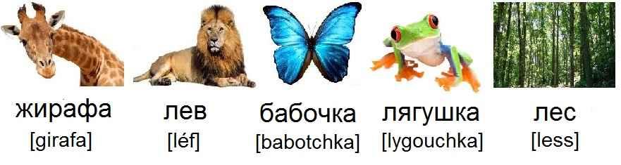 girafe_жирафа_lion_лев_papillon_бабочка_grenouille_лягушка_forêt_лес