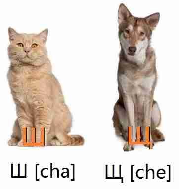 chat_chien_lettres_%d1%88_%d1%89_%d1%86_%d1%87_alphabet_russe_cyrillique