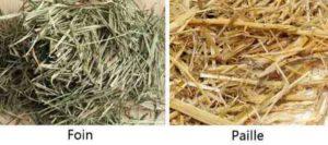 différence entre foin et paille