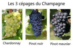 les trois cépages du champagne