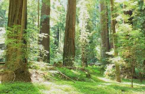 forêt_tempérée_climat_biome