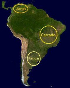 Savane en Amérique du Sud