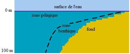 zone_benthique