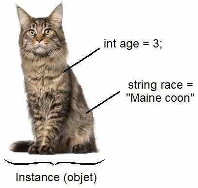 maine_coon_objet