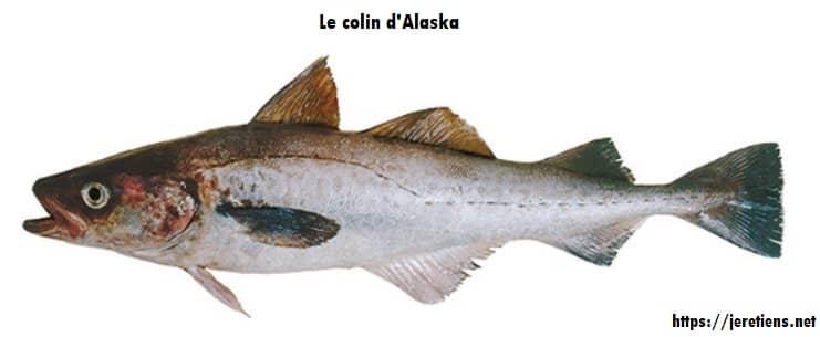 colin_d'Alaska