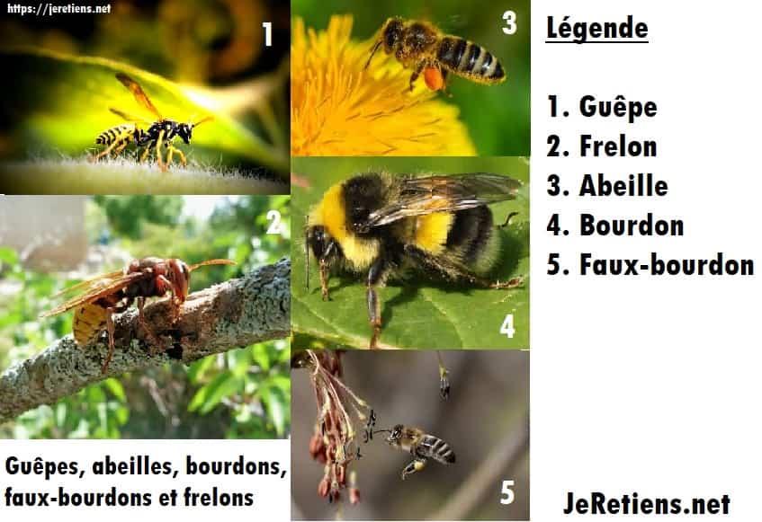 Différence piqure abeille et guêpe, danger et traitements