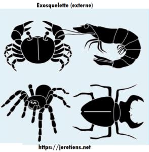 Exemples d'exosquelettes chez les animaux