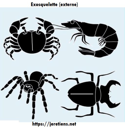 exosquelette_animaux_carapace_pinces_araignée