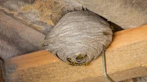 Eliminer nid de guêpes sous un toit
