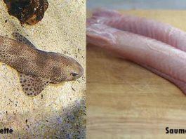 Différence entre la petite roussette et la saumonette