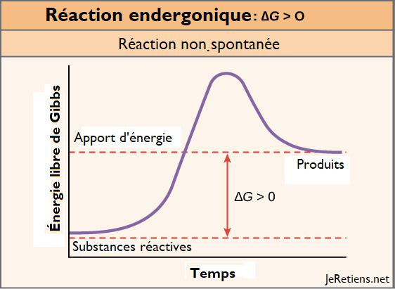 Schéma d'une réaction endergonique, réaction chimique non spontanée nécessitant un apport d'énergie. Mise en perspective avec l'énergie libre de Gibbs.