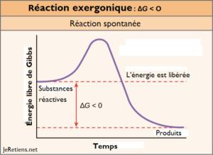 Schéma d'une réaction exergonique, réaction chimique spontanée ne nécessitant pas un apport d'énergie. Mise en perspective avec l'énergie libre de Gibbs.
