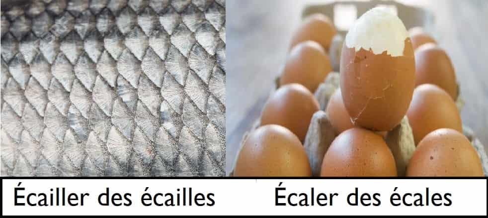Écailler ou écaler un œuf ? Différence entre les verbes écailler et écaler et définitions