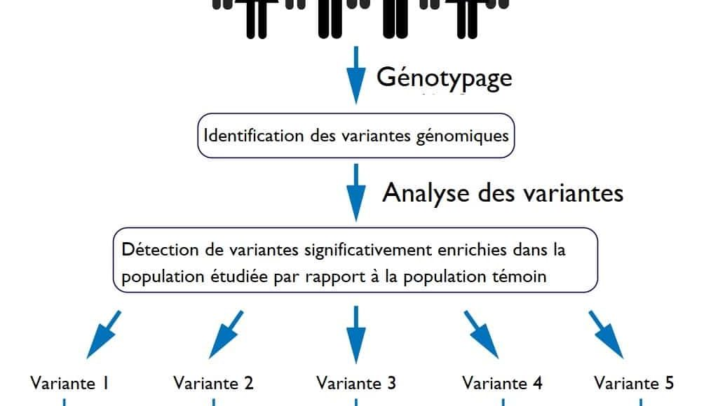 génotype_phénotype_adn_population_maladie_à_risque