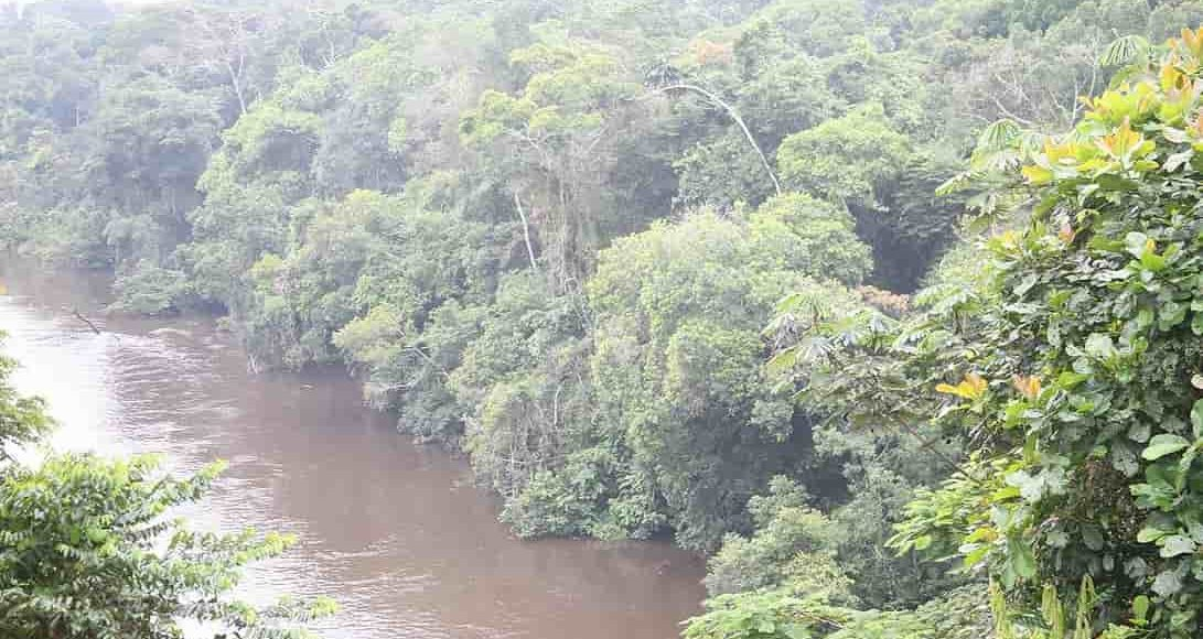 jungle_impénétrable_forêt_tropicale_cameroun