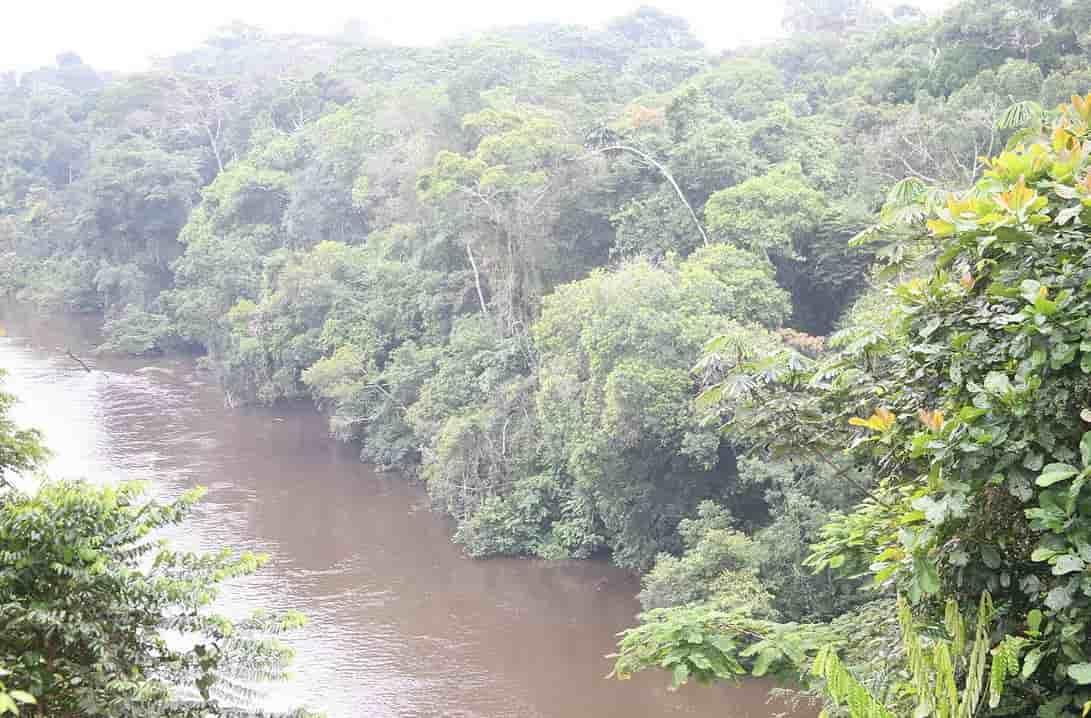 Une jungle impénétrable sur les bords d'une rivière au Cameroun.