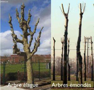 Différence entre l'élagage et l'émondage d'un arbre.