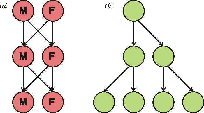 Illustration du double coût de la reproduction sexuée. Si chaque organisme devait contribuer au même nombre de descendants (deux), (a) la population reste de la même taille chaque génération, où (b) la population asexuée double en taille chaque génération.
