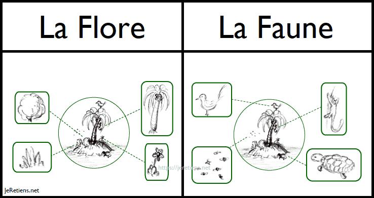 Illustration de la différence entre la faune et la flore. Dans le cas de cette image, il s'agit de la faune et de la flore que l'on peut retrouver sur une île.