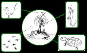 Exemples de la faune d'une île.