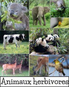 Exemples d'animaux herbivores