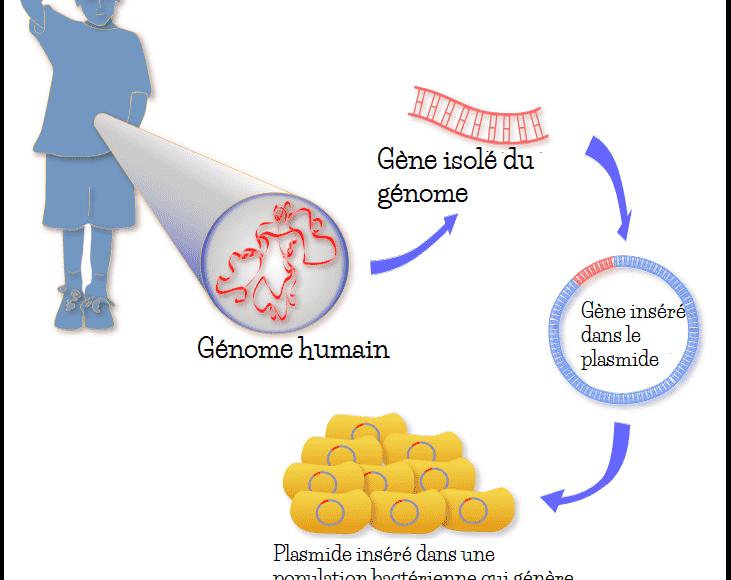 clonage_génétique_gène_humain