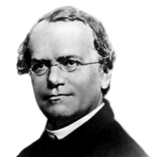 Gregor Mendel (1822 - 1884).