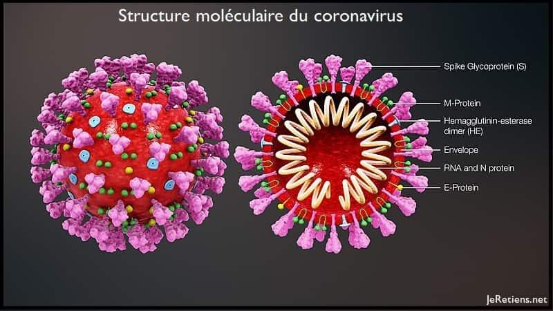 Composants internes du Coronavirus