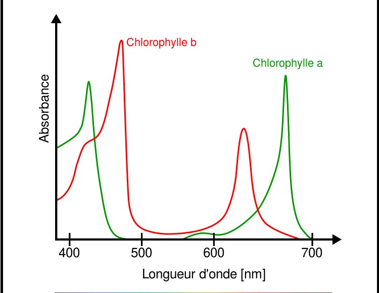 spectre_absorption_chlorophylle_a_b
