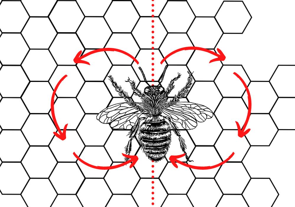 danse des abeilles