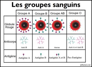 Quels sont les groupes sanguins et leurs antigènes ou anticorps ?