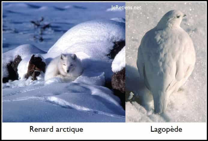 Comment les animaux ont-ils évolué pour se camoufler ?