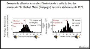 L'évolution de la taille de becs des pinsons de Darwin après la sécheresse