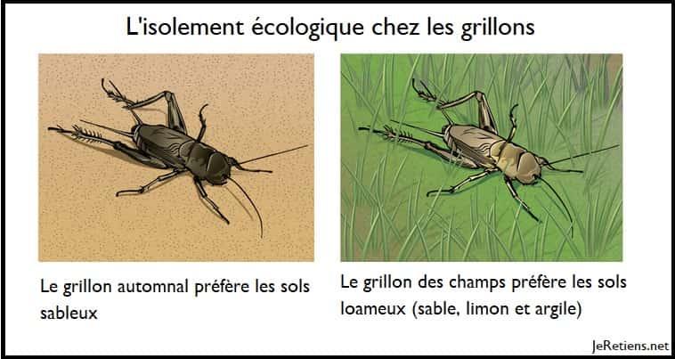 Exemple d'isolement écologique