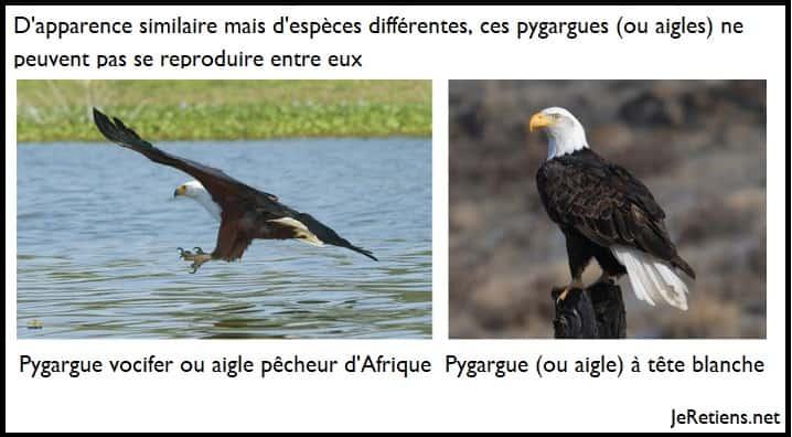 Pourquoi des espèces différentes ne peuvent pas se reproduire ?