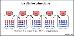 Schéma de la dérive génétique