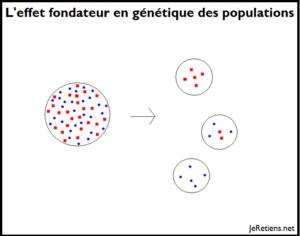 Qu'est-ce que l'effet fondateur en génétique des populations ?