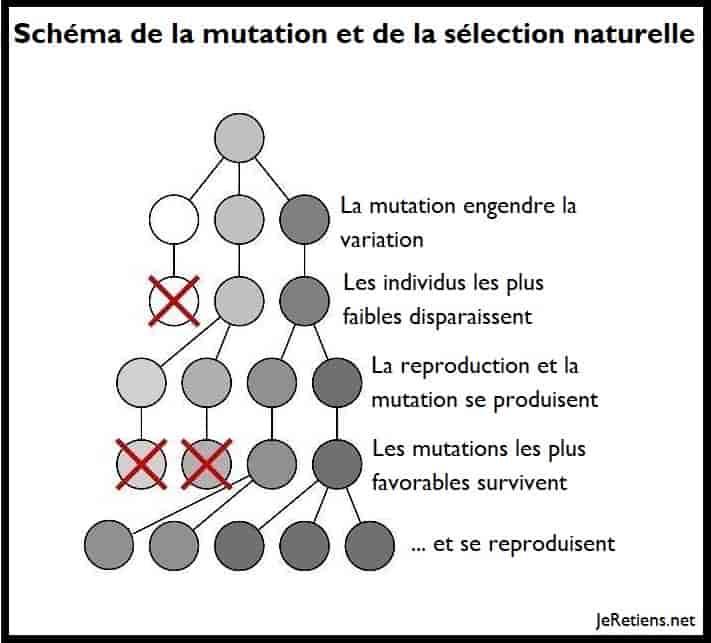 Qu'est-ce que la sélection naturelle ?