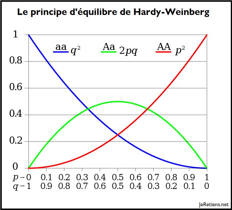 Modèle de Hardy-Weinberg